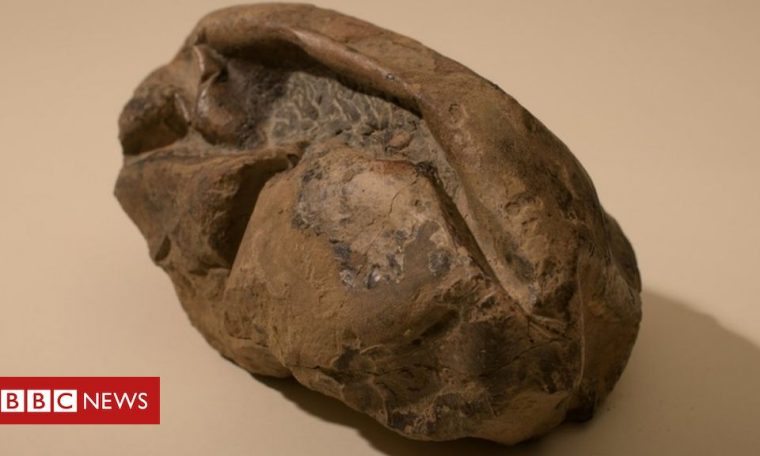 Mystery egg likely belonged to giant sea reptile, scientists say