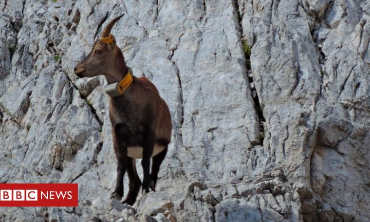 Wildlife scientists examine the great 'human pause'