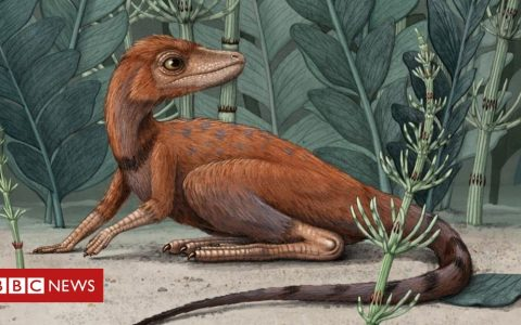 Dinosaur ancestors 'may have been tiny'