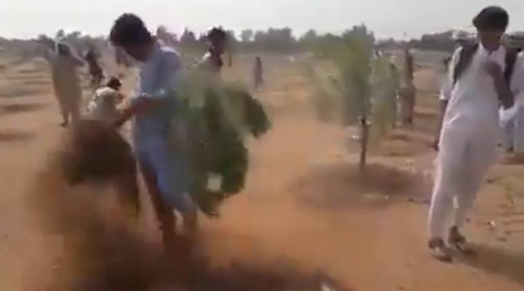Why Pak men in this viral video uprooted saplings after Imran Khan's call to plant trees