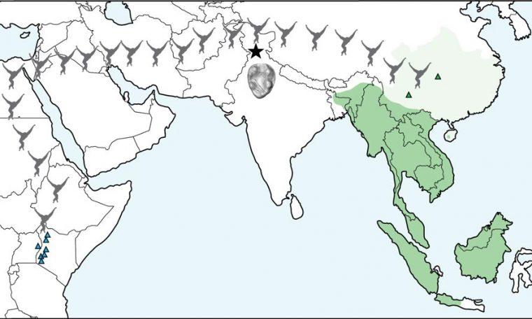 Gibbon Migration Map