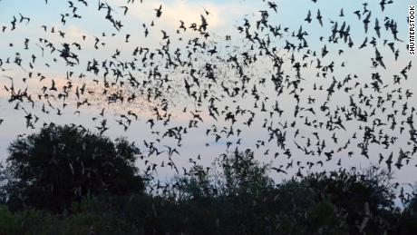 The National Weather Service spotted a giant bat colony on its weather radar