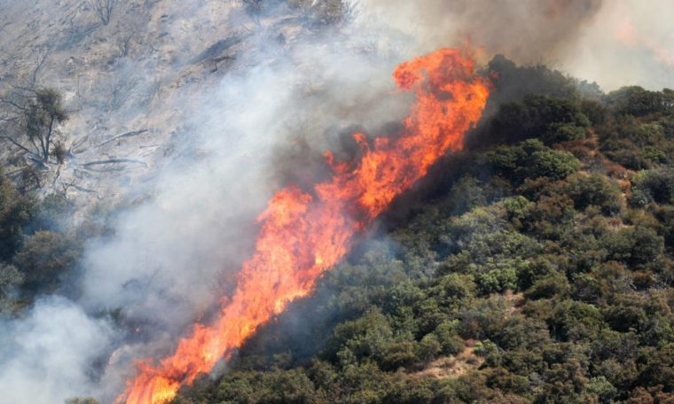 A sex party sparked a forest fire in El Dorado, California