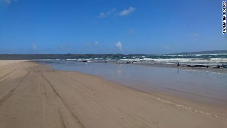 One of the sandbars where the whale pod was washed in Tasmania, Australia.