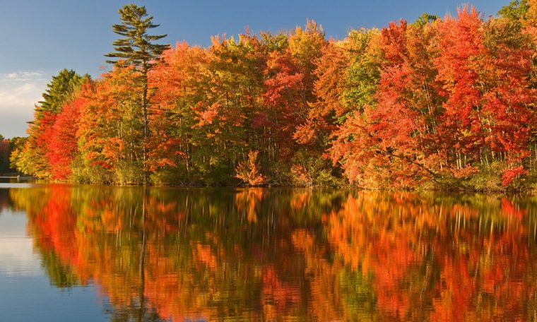 The weather is rapidly forcing autumn plants and is increasing in other areas