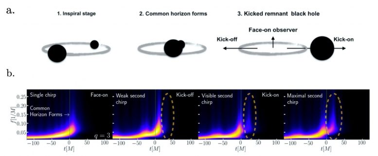 Black hole merging phase