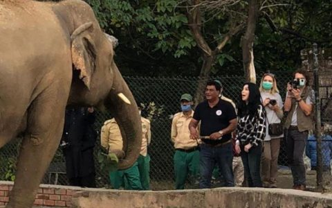 Charan helps Kavan, a lone elephant, find new life after 35 years, and maybe even love