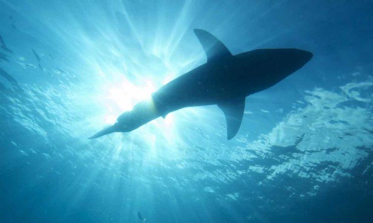 Unusual shark attack in Australia leaves man in critical condition