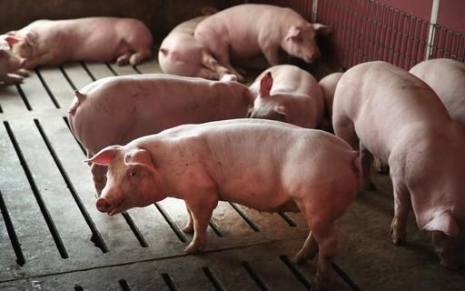 Confirms Hong Kong's local case of African swine fever over a decade, USDA says - Negpoca Negócios