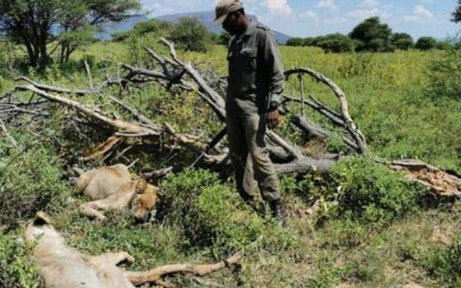 Two animals died after guide's death