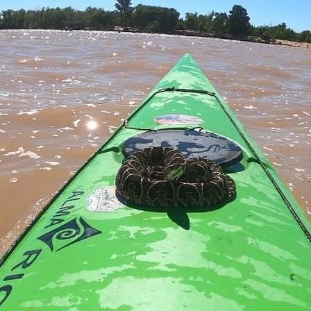 Cobra frightens river kayak instructor in Argentina