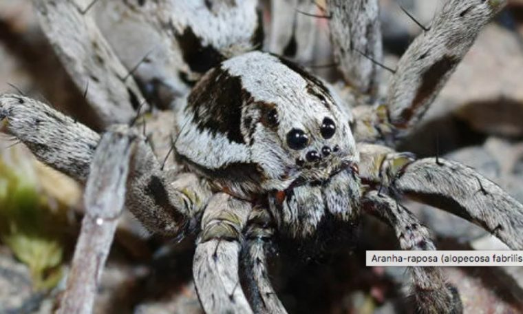 Giant spiders invade the city to escape the floods;  Watch the video    Unusual world