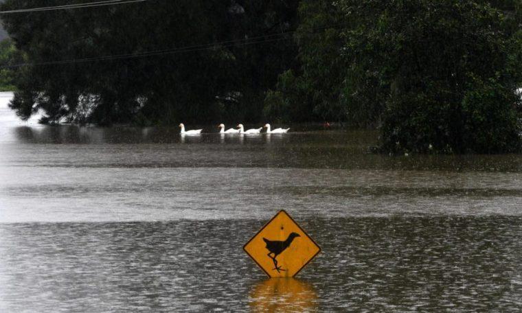 Wildlife is being destroyed by floods in Australia