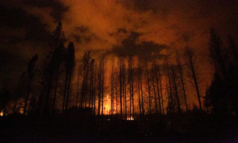 7 forest injured and 15 missing Argentina in Patagonia |  world