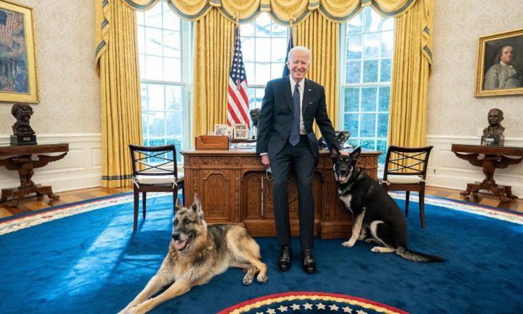 Biden's Adopted Dog Gets Minor Hurt to White House Agent World