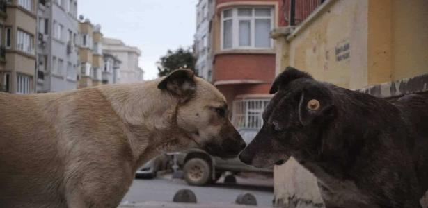 Istanbul Stray Dogs is the protagonist of a new documentary - 03/23/2021