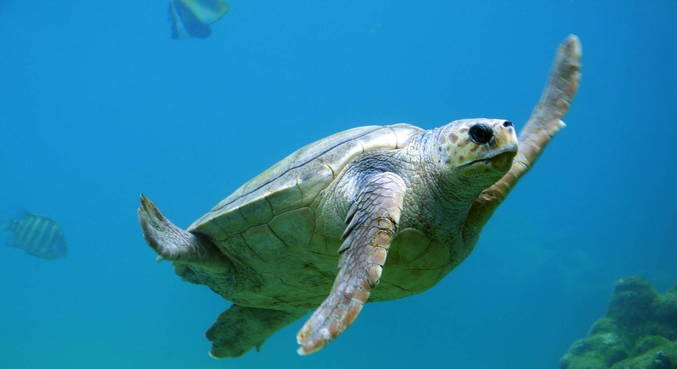 Nineteen dead after sea turtle consumption in Madagascar - News