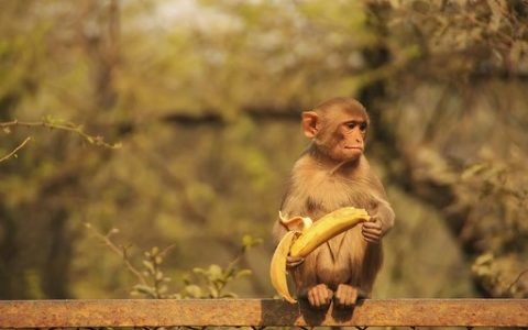 The gang which trained the monkeys to steal, was arrested in India - Marie Claire Magazine