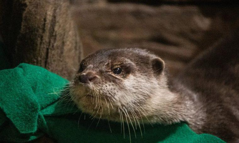 Coronovirus is detected at the Aquarium of the United States