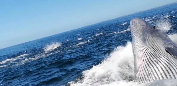 The whale fell into the sea after being hit by a tourist boat