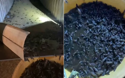 Farmer catches thousands of mice from improvised nets in Australia - Marie Claire magazine