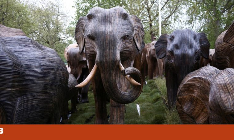 From India to London, 125 elephants parade to teach us about coexistence.  Biodiversity