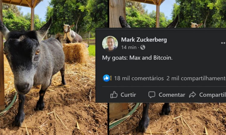 Mark Zuckerberg says that he has a goat named Bitcoin and he posts a picture on Facebook