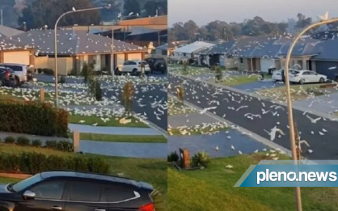 Video: Hundreds of birds invade the city of Australia.  world