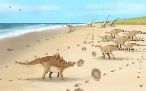 Footprints of six dinosaur species discovered in Britain