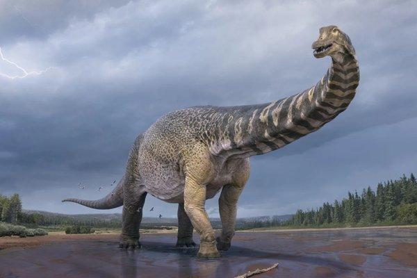New species of giant dinosaur found in Australia