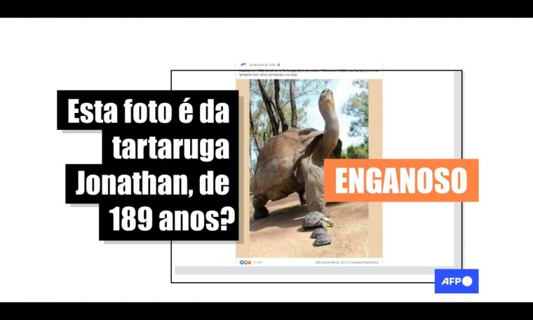 The turtle in the picture is a giant Galapago from Australia, not Jonathan of St. Helena