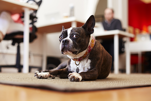 dog in office environment