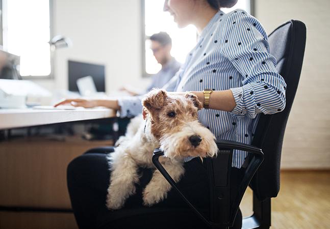 Pets: com volta ao normal, escritórios no Reino Unido passam a permitir cães no trabalho