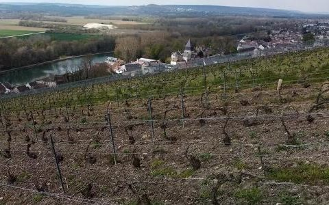 """After frost, fungus strikes Champagne vineyards: """"It's terrible"""" - 07/27/2021"""