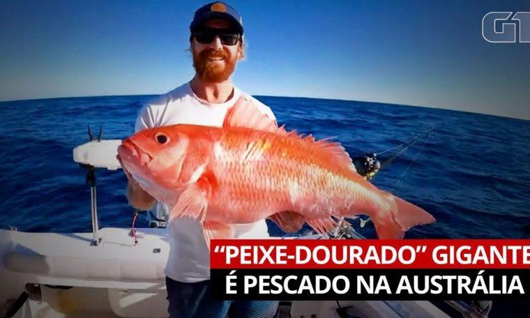 Man fishing for giant 'goldfish' in Australia |  World