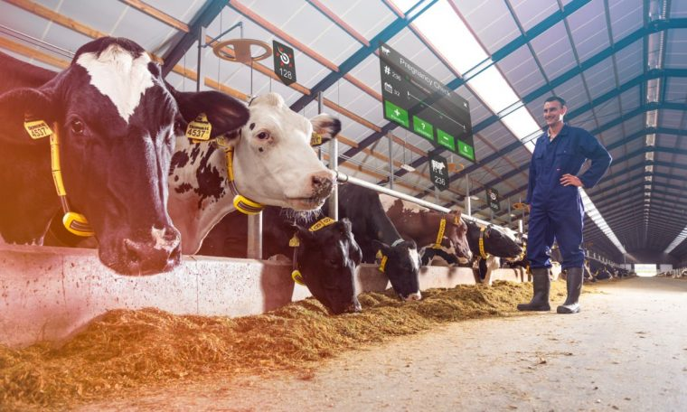 Solar-powered Bali connects cattle to satellites