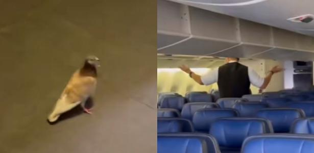 Transatlantic flight delayed after pigeon 'disappears' on board and plane