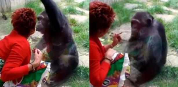 Woman banned from zoo for affectionate relationship with chimpanzee: 'He loves me'