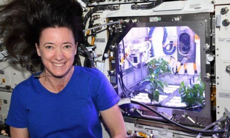 pepper plants bloom in space