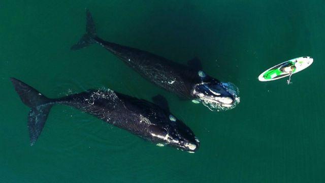Si la ballena se baña