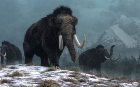 Is it possible to 'revive' mammoths to fight climate change?  - business season