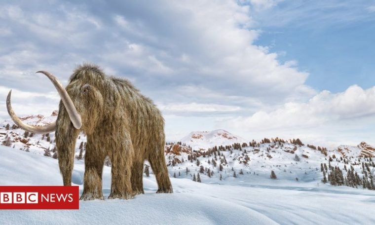 Is it possible to 'revive' mammoths to fight climate change?