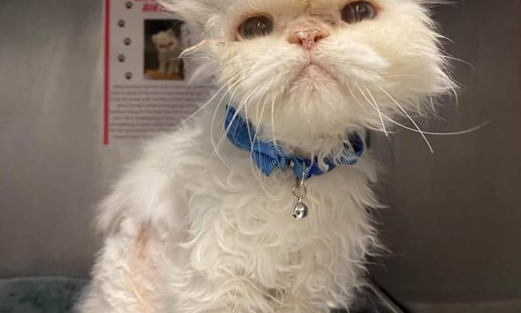 Shelter to 19-year-old adopted cat after help goes viral  look how good