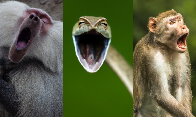 The contest chooses the funniest pictures ever taken in the animal world;  View Finalists