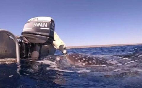 7-Meter Shark Kissing Dog During Boat Trip - Glamor Magazine