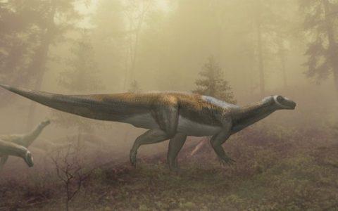 """Dinosaur footprints found in Australia belong to """"friendly herbivores"""" - Galileo Magazine"""