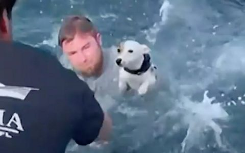Dog rescued by sailors after being found alone in the middle of the sea.  dogs