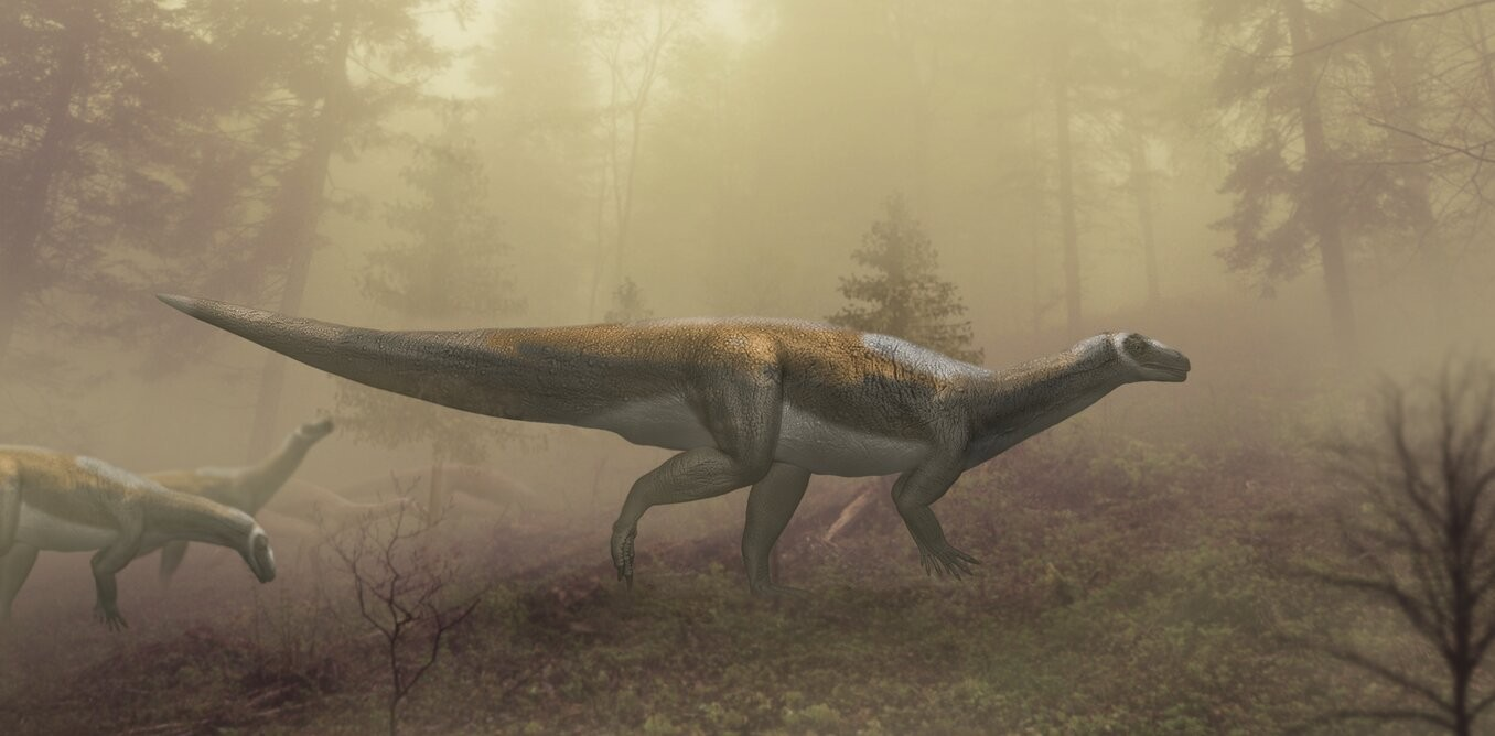 Dinosaur footprints found in Australia belong to