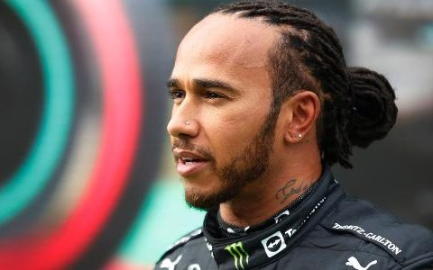 Hamilton could be arrested for giving vegetarian food to dog